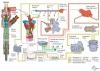 Общая схема построения системы управления дизельным двигателем CR